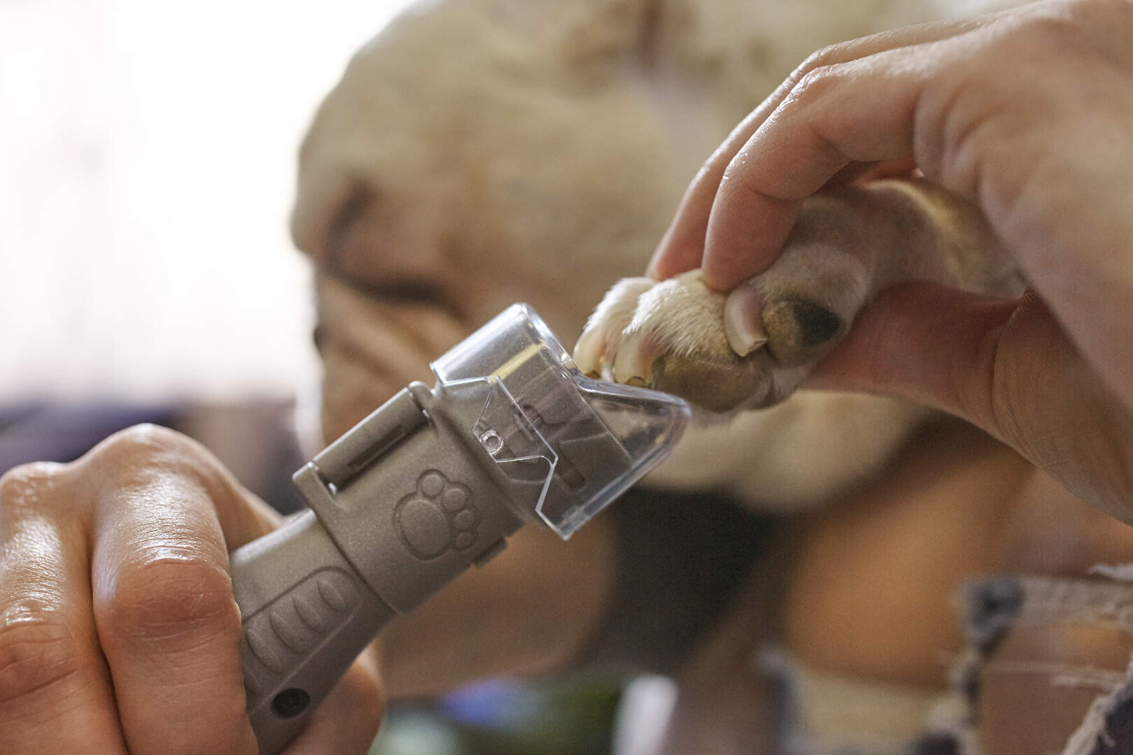 Dremel Pet Nail Grooming Kit alat za sečenje noktiju psima